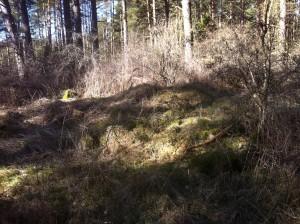Resterna av stugan som Therese en gång bodde i.